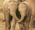 Elephants are vegetarians!