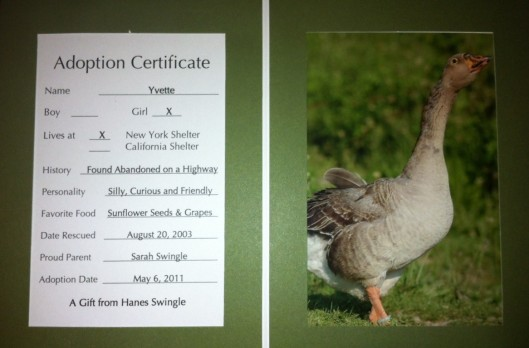 "For my birthday one year, my husband Hanes ""adopted"" Yvette the goose for me from Farm Sanctuary! That was my favorite present."
