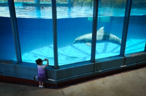 Dolphin in Captivity