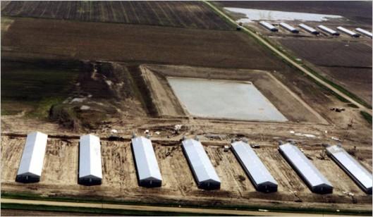 factory farm nearby